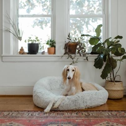 Smog w mieszkaniu znacznie szkodzi również zwierzętom domowym