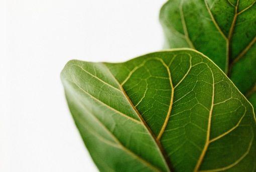 Rośliny doniczkowe - ważny element w walce ze smogiem w mieszkaniu