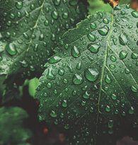 Nasze osiedla wykorzystują wodę zebraną podczas opadów deszczu do podlewania ogrodów i mycia rowerów, butów oraz narzędzi